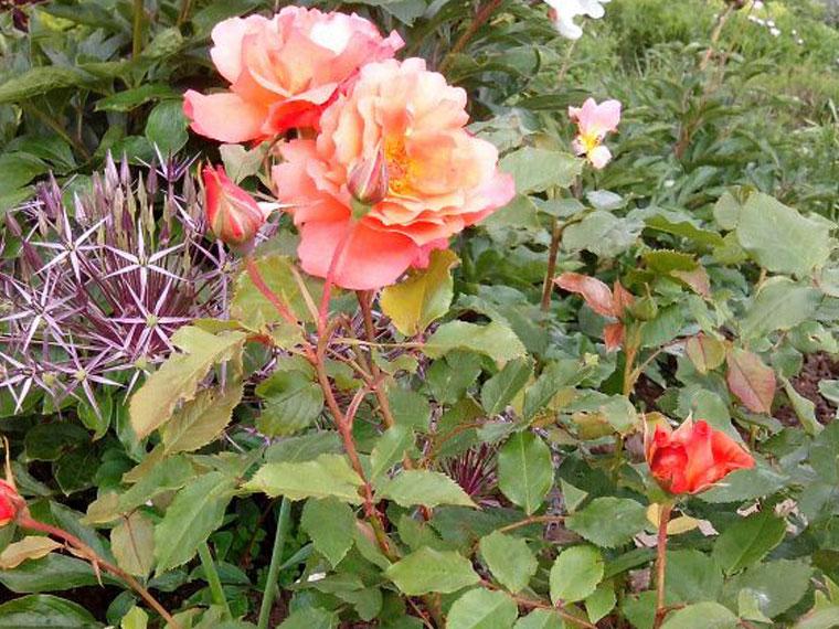 Landschafts- und Gartenpflege